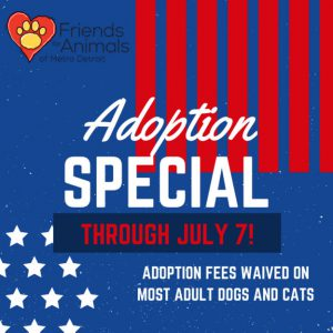 Adoption Special on Cats and Kittens Through July 14!